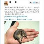 【残念】世界一小さな猫、実は「コラ」だった可能性!ごめんにゃさい