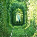 死ぬ前に通りたいジブリの世界のような『愛のトンネル』が驚愕の美しさ