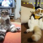 顔がフラットデザインの猫「ホンシャオパン君」がカワイイと話題に