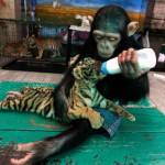 2011年世界を震撼させた動物の写真50枚。一番多い国は・・・