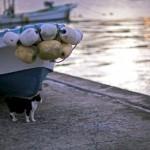 猫を神として崇める神秘的な島が日本にあるらしい