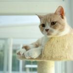 超高級な猫用のホテルが登場