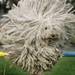 目を疑う、斬新過ぎる犬のヘアカット写真