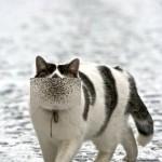 猫ヤクザ相関図に出てきそうな極道的な猫が話題に