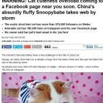 顔フラット猫「ホンシャオパン君」ついに権威あるイギリス誌DailyMailにデビュー!