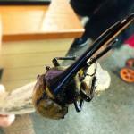 磐田の『こんちゅう館』虫に興味は無いが意外にワクワクがとまらなかった。