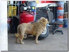 a?i??ai??i??ai???a??a?i??ai???a?i??a??cSi??ai???a?i??ai??i??a?i??a??ai??i??ai???a??ci???ei??i??a?i??ai???ei??i??e??ai??i??ai???a?i?? lion1 thumb
