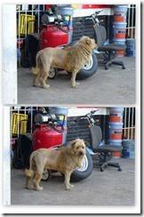a?i??ai??i??ai???a??a?i??ai???a?i??a??cSi??ai???a?i??ai??i??a?i??a??ai??i??ai???a??ci???ei??i??a?i??ai???ei??i??e??ai??i??ai???a?i?? lion2 thumb