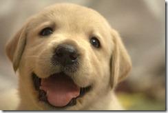 犬は恥を知らない?-叱られた時の申し訳なさそうなポーズは、謝罪ではない事が明らかに。 31981ce00b89e3c6e6b19954a8c13b86 s thumb1