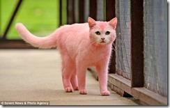 リアルピンクパンサーか!ピンク色の猫が発見される pink1 thumb