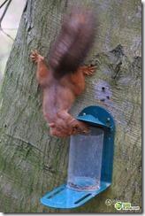 リスが鳥のエサを盗み食いをしたら抜けられなくなる事故が話題に a7edb993 s thumb