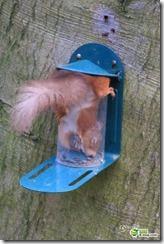 リスが鳥のエサを盗み食いをしたら抜けられなくなる事故が話題に d22ad60c s thumb