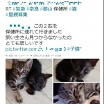 中川翔子さん炎上の保健所の猫が助かったことが明らかに
