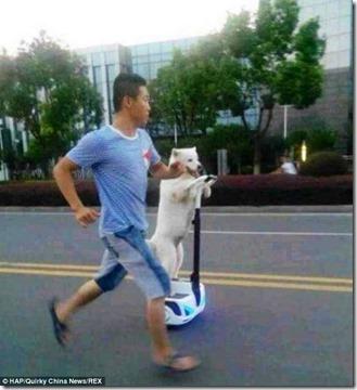 「セグウェイ」で犬の散歩をする男性が世界中で話題に 3652e627 thumb