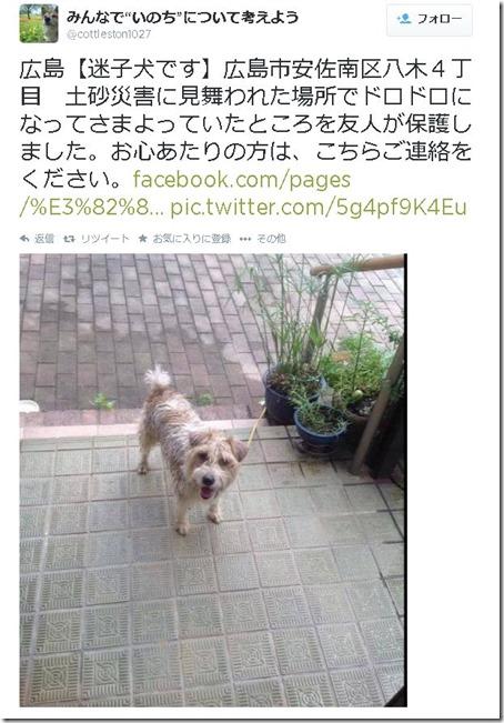 広島土砂災害で迷子になった犬が無事SNSを活用し飼い主と再会 f08fe337 thumb