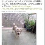 広島土砂災害で迷子になった犬が無事SNSを活用し飼い主と再会