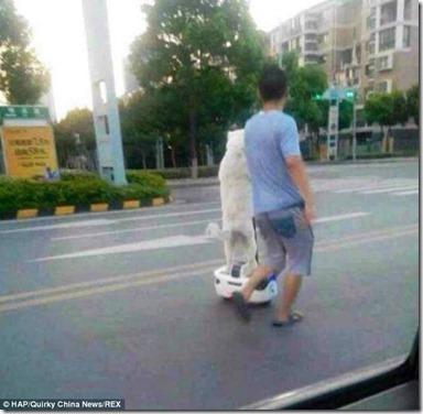 「セグウェイ」で犬の散歩をする男性が世界中で話題に f2e8bb4a thumb