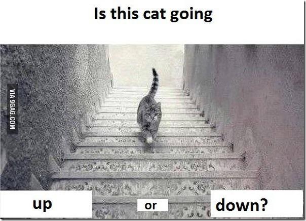 【謎】おい!この猫登ってるのか?それとも下ってるの?ドレス騒動の再来か? 28a16376 s thumb