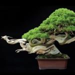 樹齢800年の盆栽があまりに「かっこ良すぎる」と海外で話題に