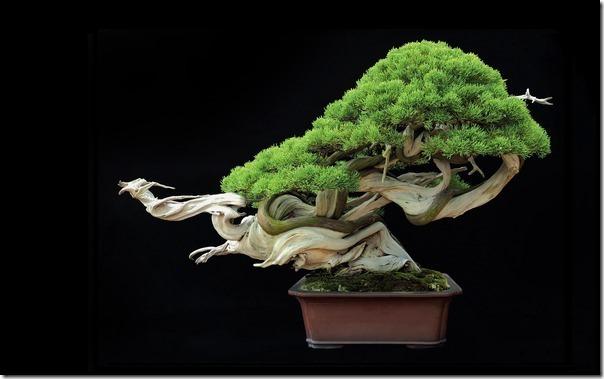 樹齢800年の盆栽があまりに「かっこ良すぎる」と海外で話題に 4bc15921 s thumb