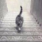 【謎】おい!この猫登ってるのか?それとも下ってるの?ドレス騒動の再来か?