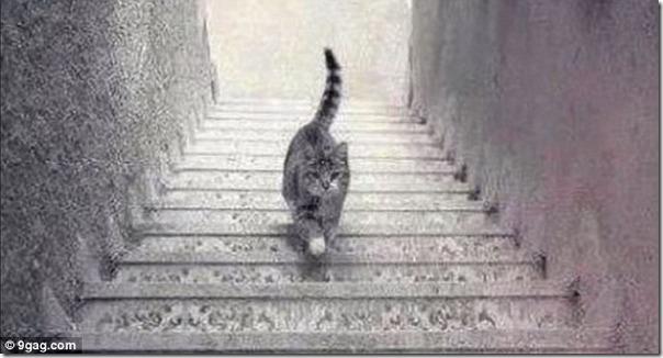 【謎】おい!この猫登ってるのか?それとも下ってるの?ドレス騒動の再来か? c4b25e8b s thumb